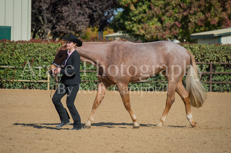 SPHS Youth Mares-171