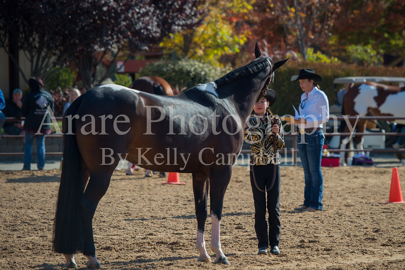 SPHS Youth Mares-114
