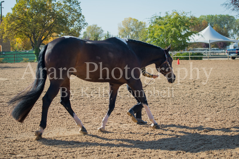 SPHS Youth Mares-106