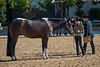 SPHS Youth Mares-120