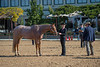 SPHS Youth Mares-122