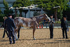 SPHS Youth Mares-115