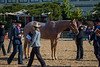 SPHS Youth Mares-174