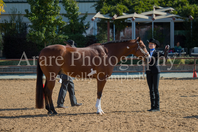 SPHS Youth Mares-112