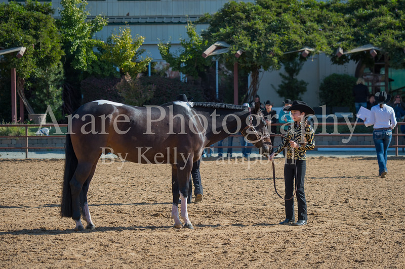 SPHS Youth Mares-121
