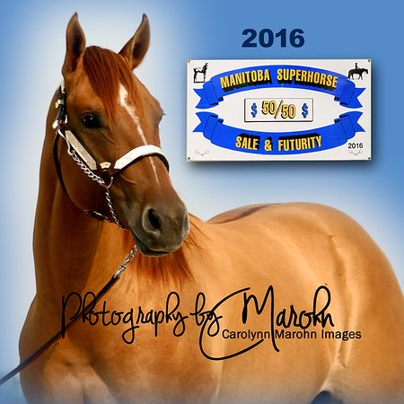 MB Superhorse 50/50 Sale & Futurity