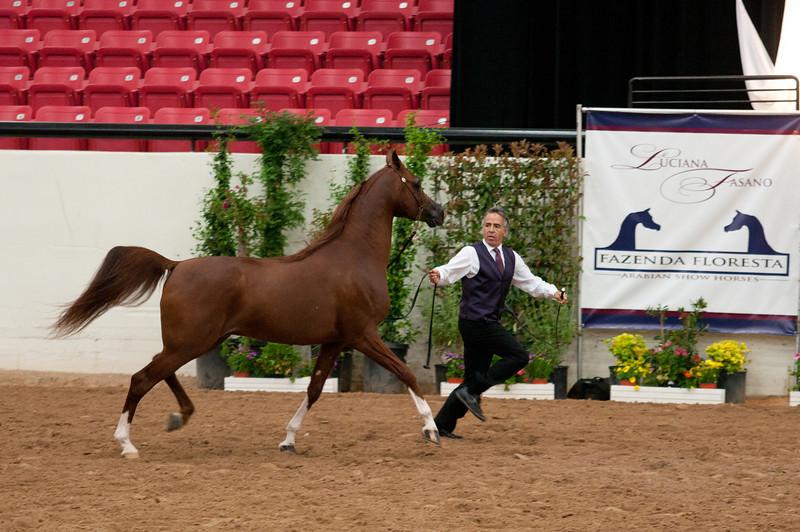 Stallions 4 yr-4934