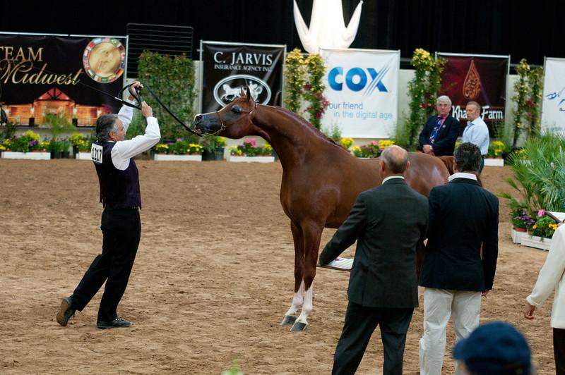 Stallions 4 yr-5058