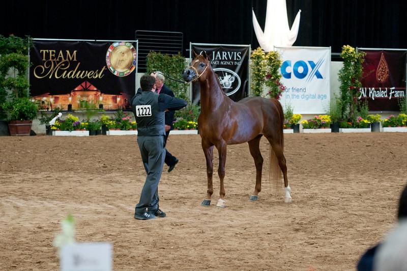 Sr stallion 4yr-5181