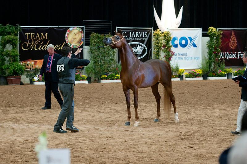 Sr stallion 4yr-5184