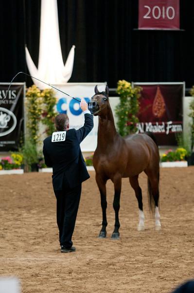 Stallions 4 yr-5121