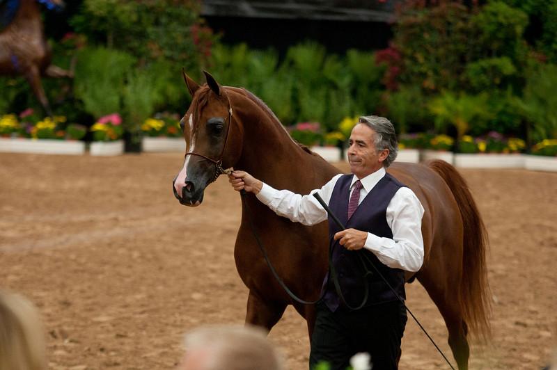 Stallions 4 yr-4970
