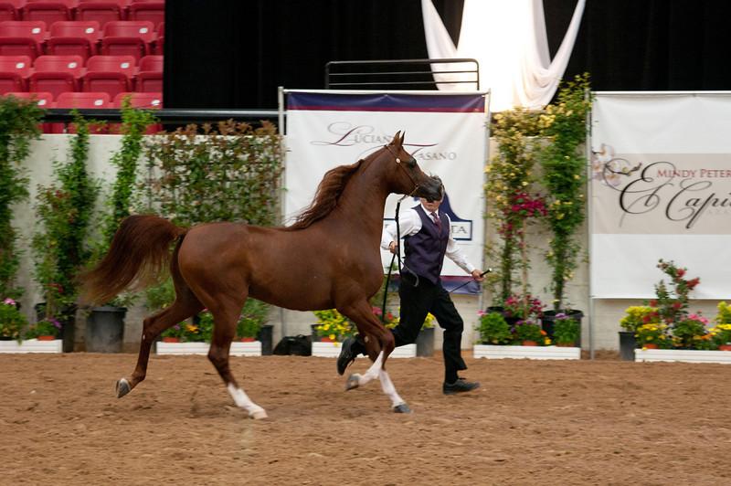 Stallions 4 yr-4935