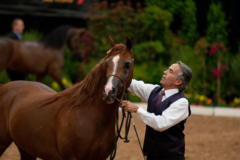 Stallions 4 yr-4965
