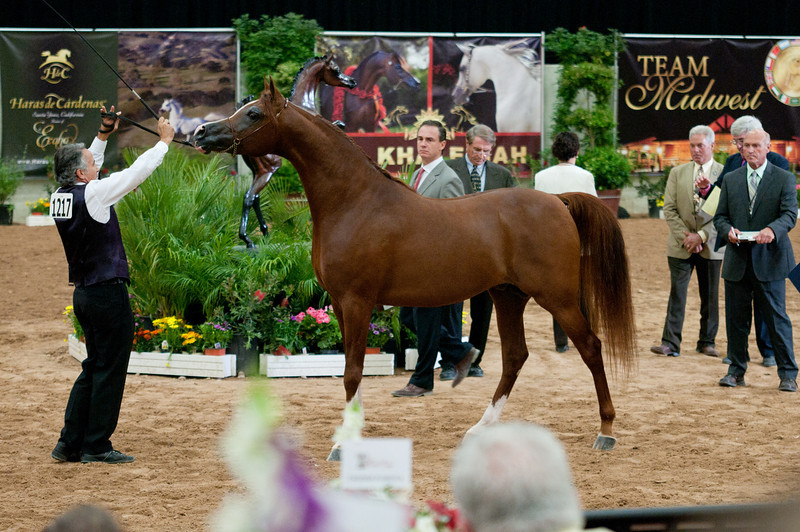 Stallions 4 yr-5082