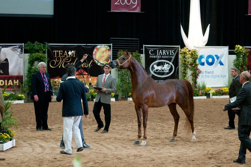 Sr stallion 4yr-5189