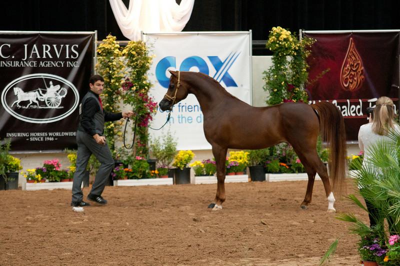 Stallions 4 yr-4996