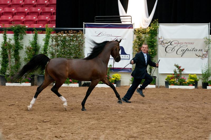 Stallions 4 yr-5111
