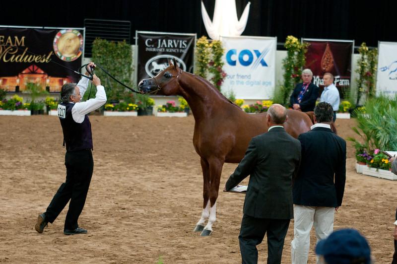 Stallions 4 yr-5057
