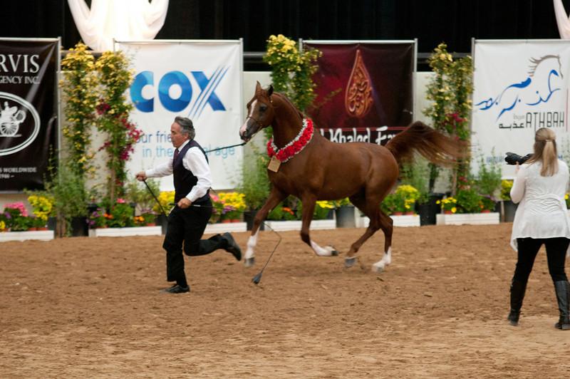 Sr stallion 4yr-5251