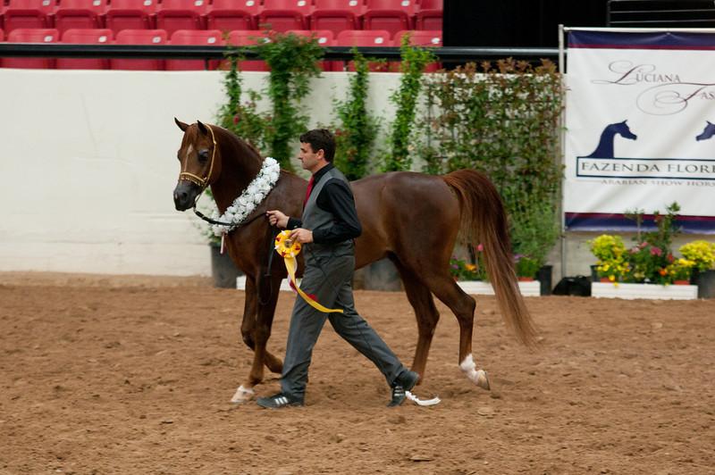 Sr stallion 4yr-5233