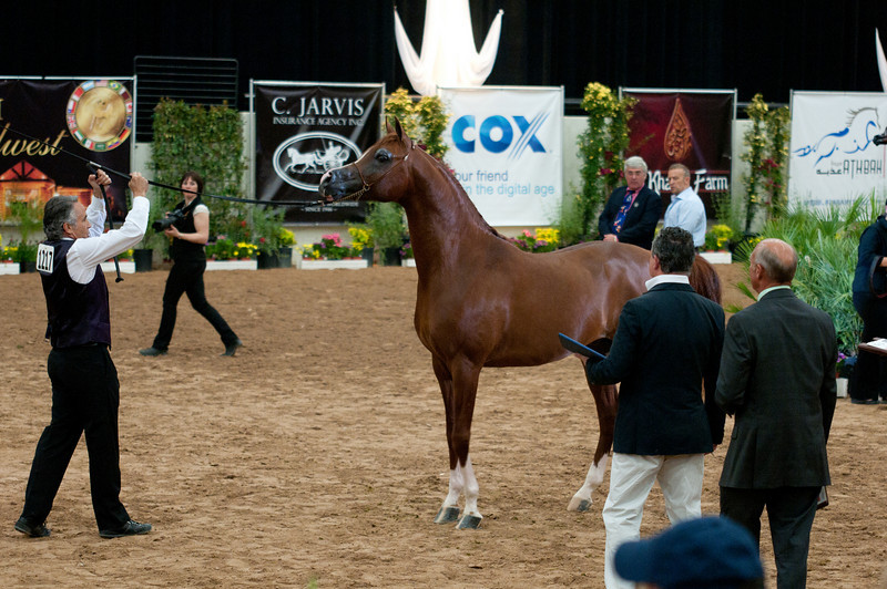 Stallions 4 yr-5049