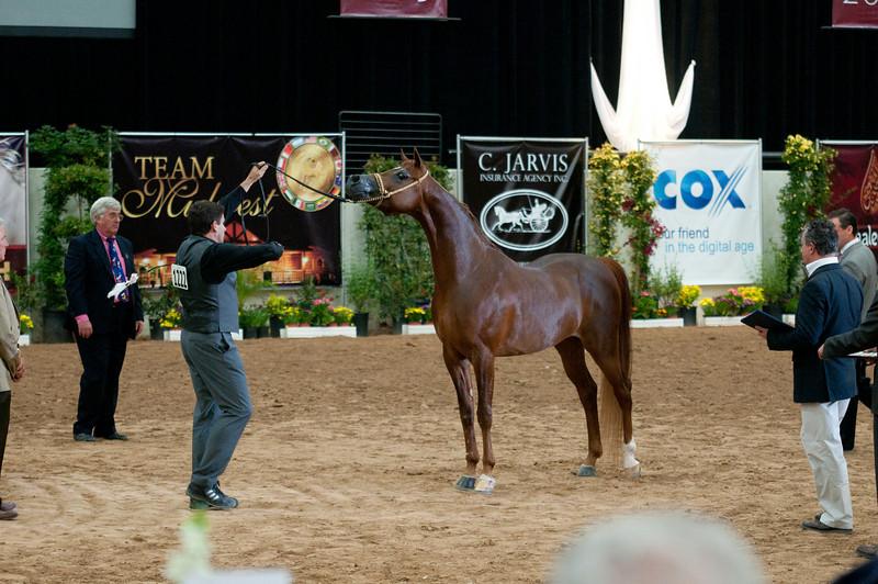 Sr stallion 4yr-5188