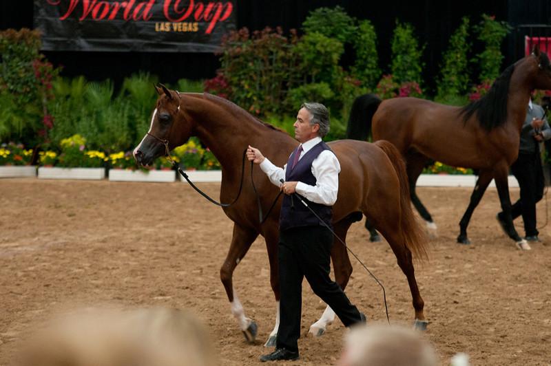 Stallions 4 yr-5009