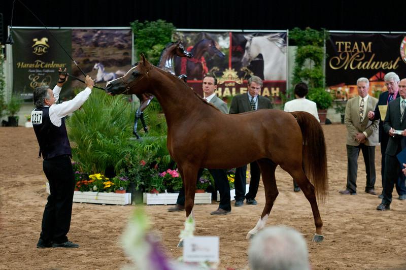 Stallions 4 yr-5083