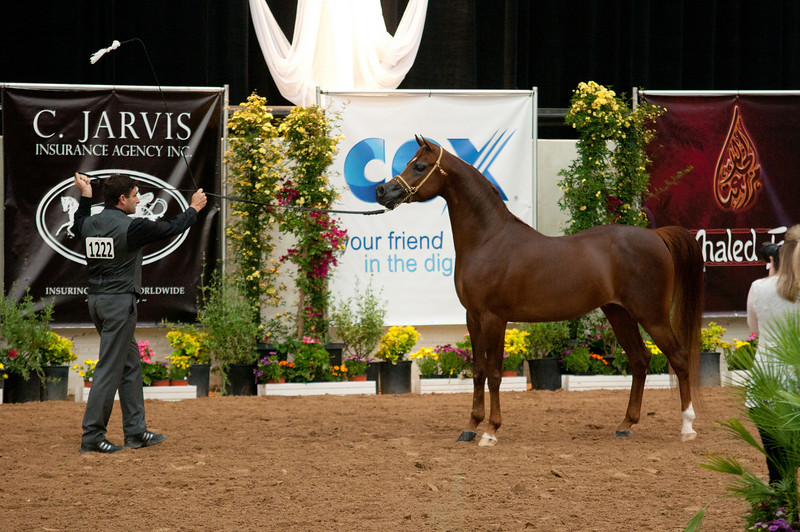 Stallions 4 yr-4991