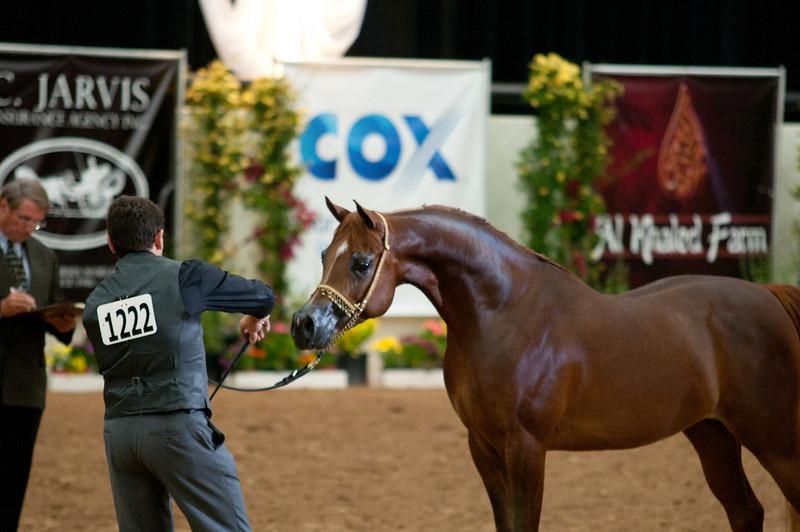 Sr stallion 4yr-5200