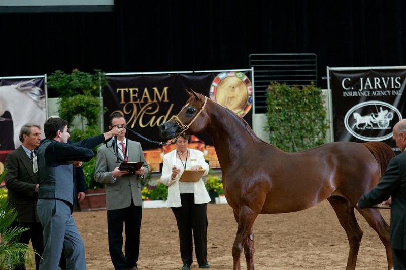Sr stallion 4yr-5192