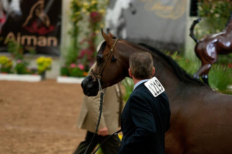 Stallions 4 yr-5019