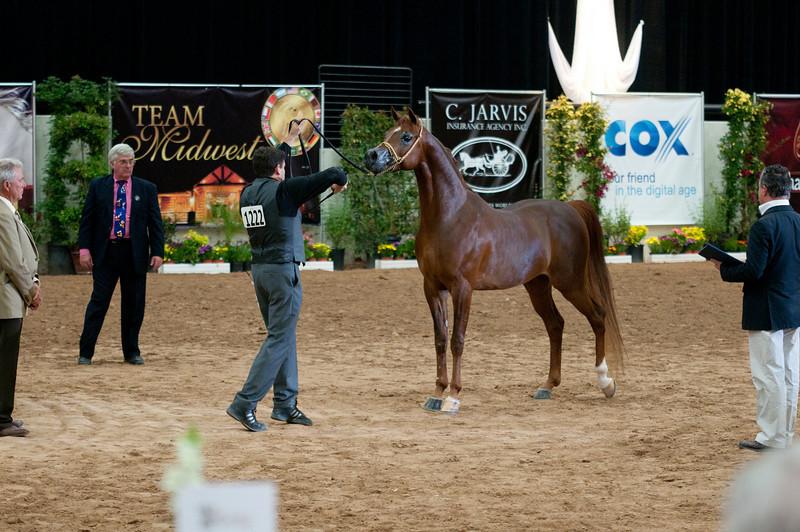 Sr stallion 4yr-5186
