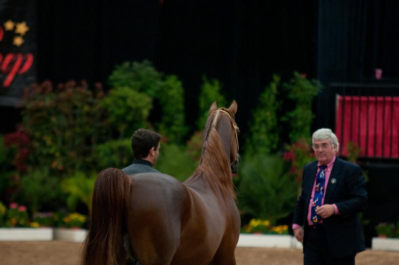 Sr stallion 4yr-5205