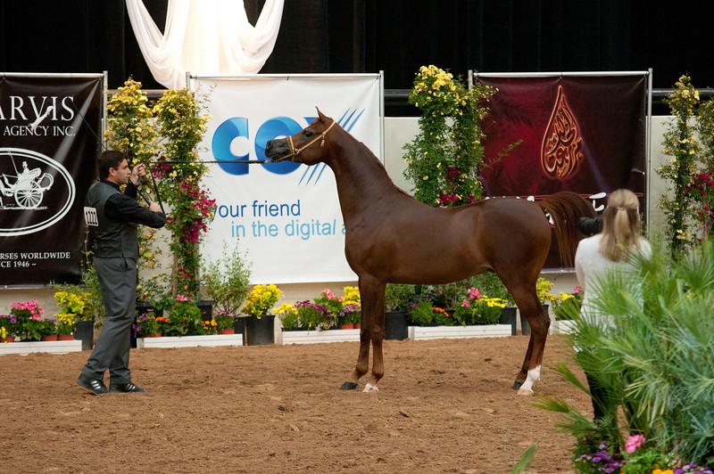 Stallions 4 yr-4994