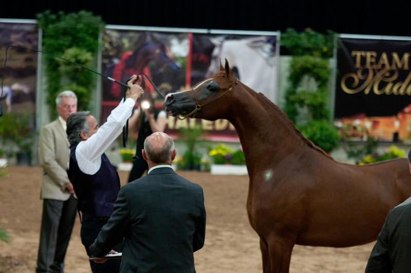 Stallions 4 yr-5066