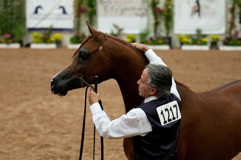Stallions 4 yr-4987