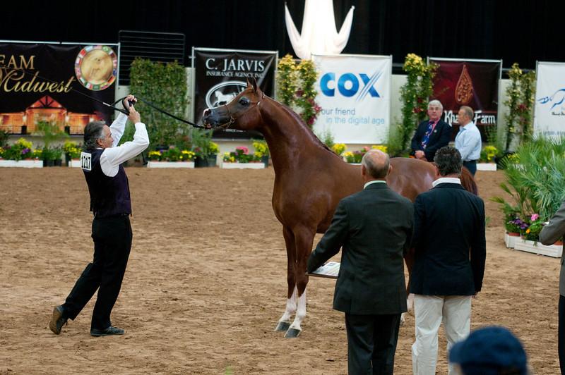 Stallions 4 yr-5054