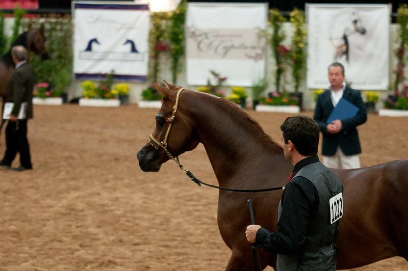 Stallions 4 yr-5007