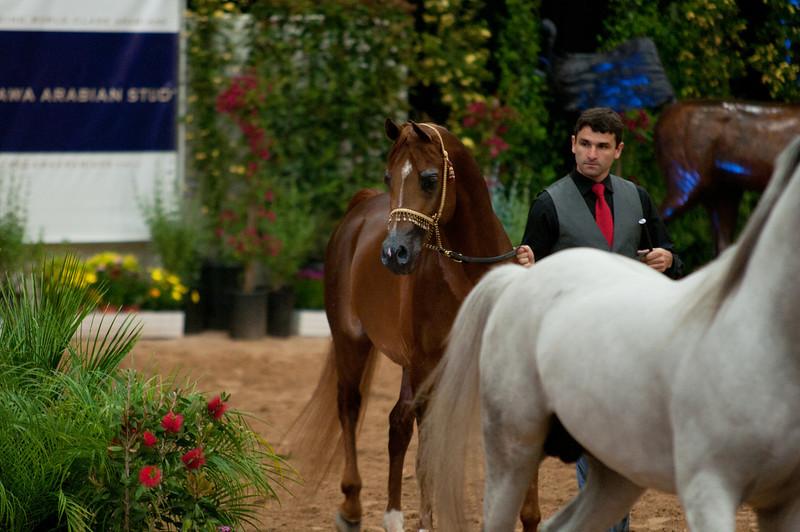 Stallions 4 yr-5020