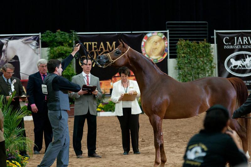 Sr stallion 4yr-5193
