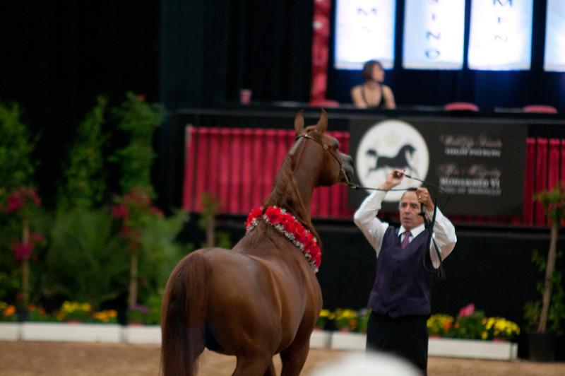 Sr stallion 4yr-5226