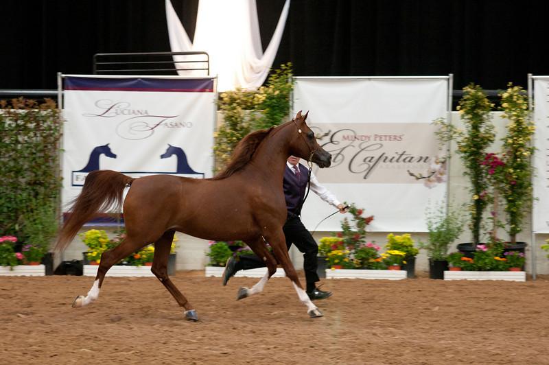 Stallions 4 yr-4936