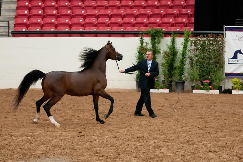 Stallions 4 yr-4960