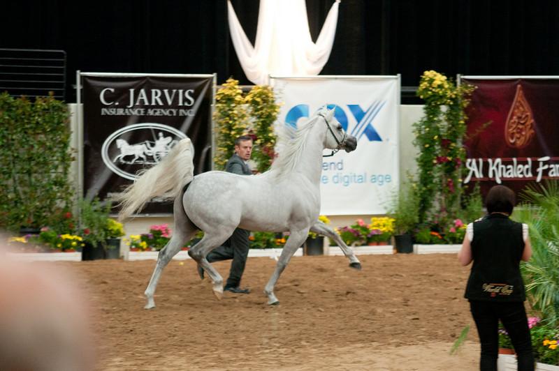 Sr stallion 5yr-5429