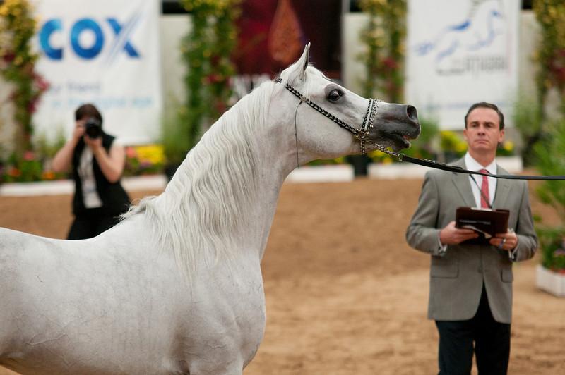 Sr stallion 5yr-5474