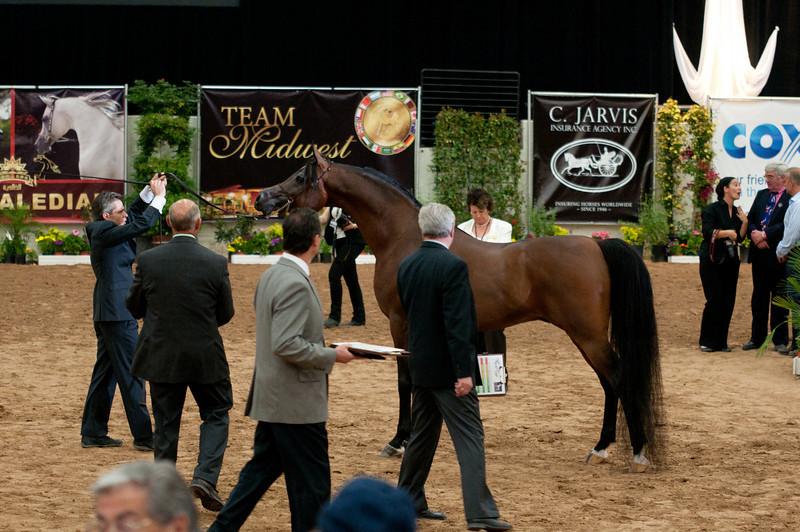 Sr stallion 5yr-5374