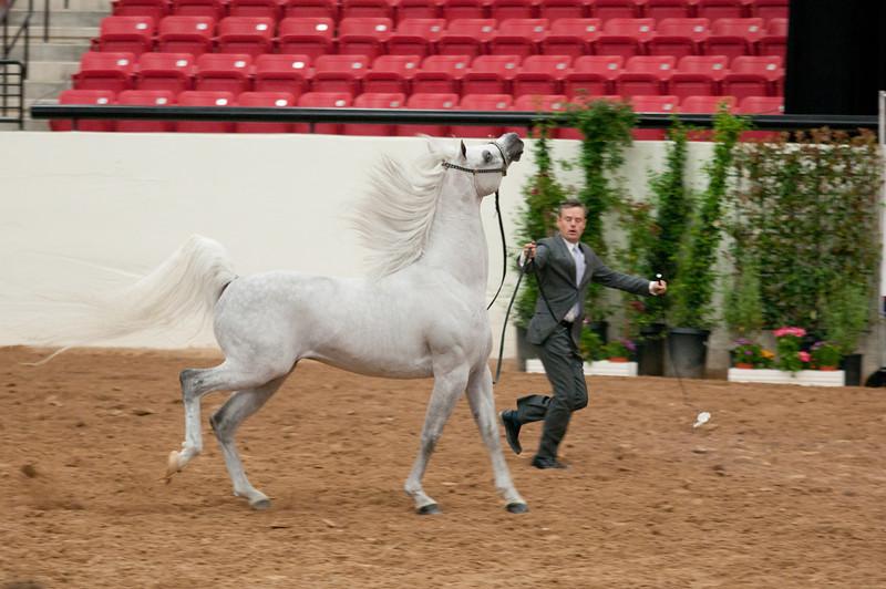 Sr stallion 5yr-5413