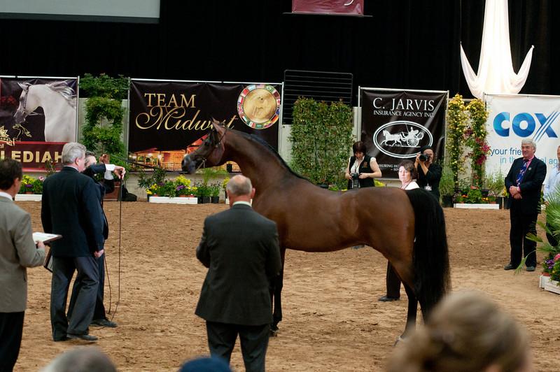 Sr stallion 5yr-5370